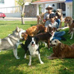 Perros sociables en leon gto