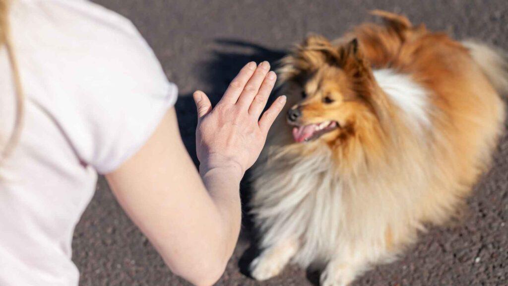 entrenamiento avanzado para perros