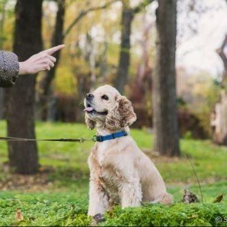 Perro entrenado por entrenador de perros