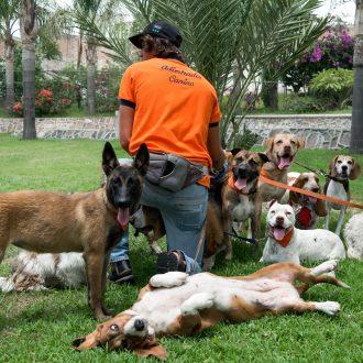 pension para perros en León